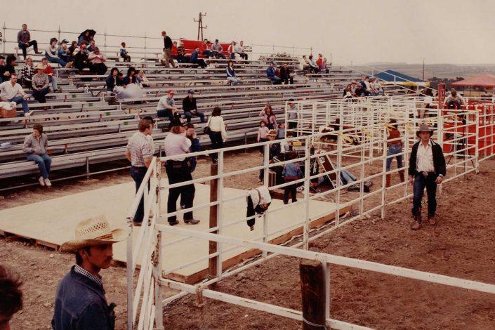 Tribüne Pferde